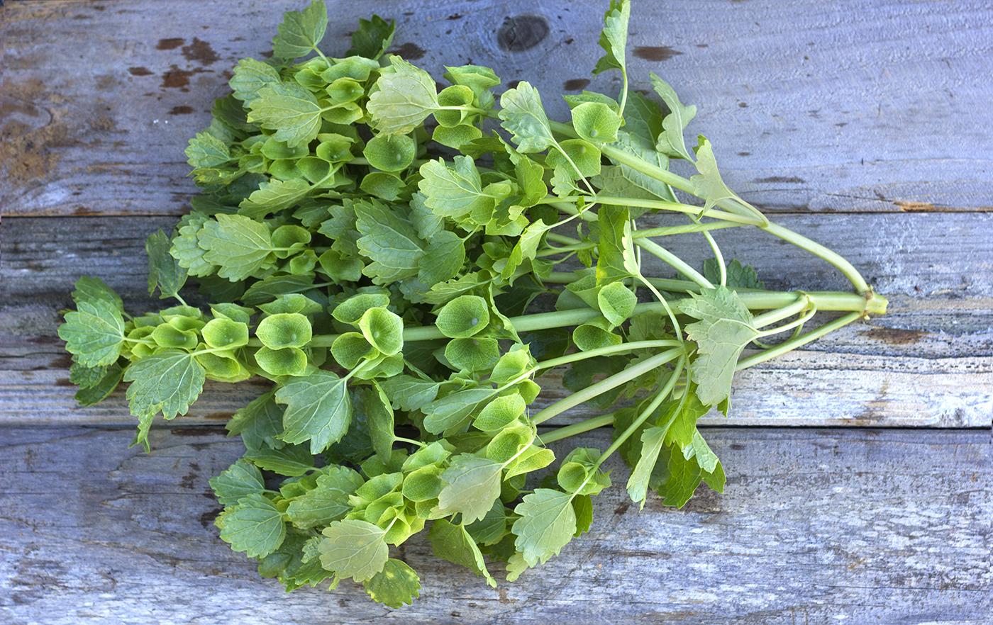 reduced_ss_bells_of_ireland_foliage_flower_farm.jpg