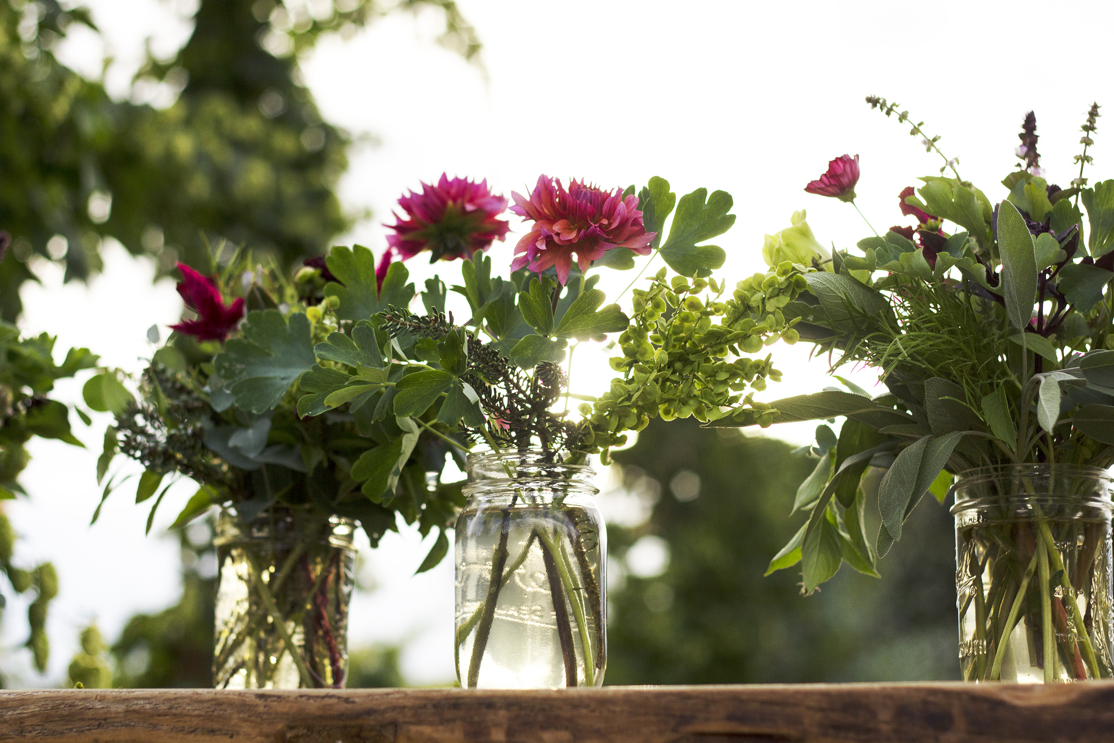 reduced_ss_flowers_jars_garden_sunset_creating_atriplex_dahlia_.jpg