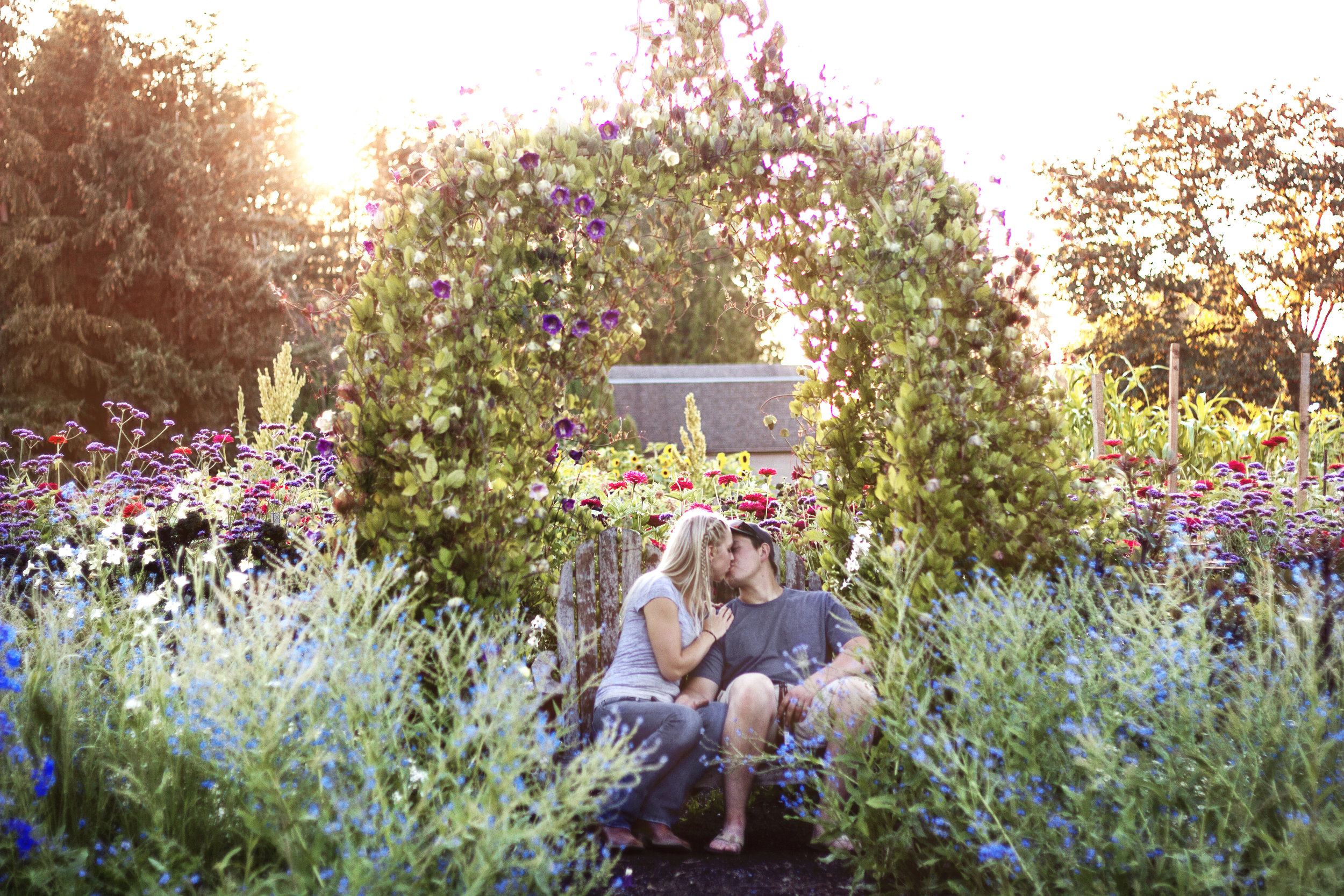 reduced_ss_amanda_dillon_flower_field_sunset.jpg