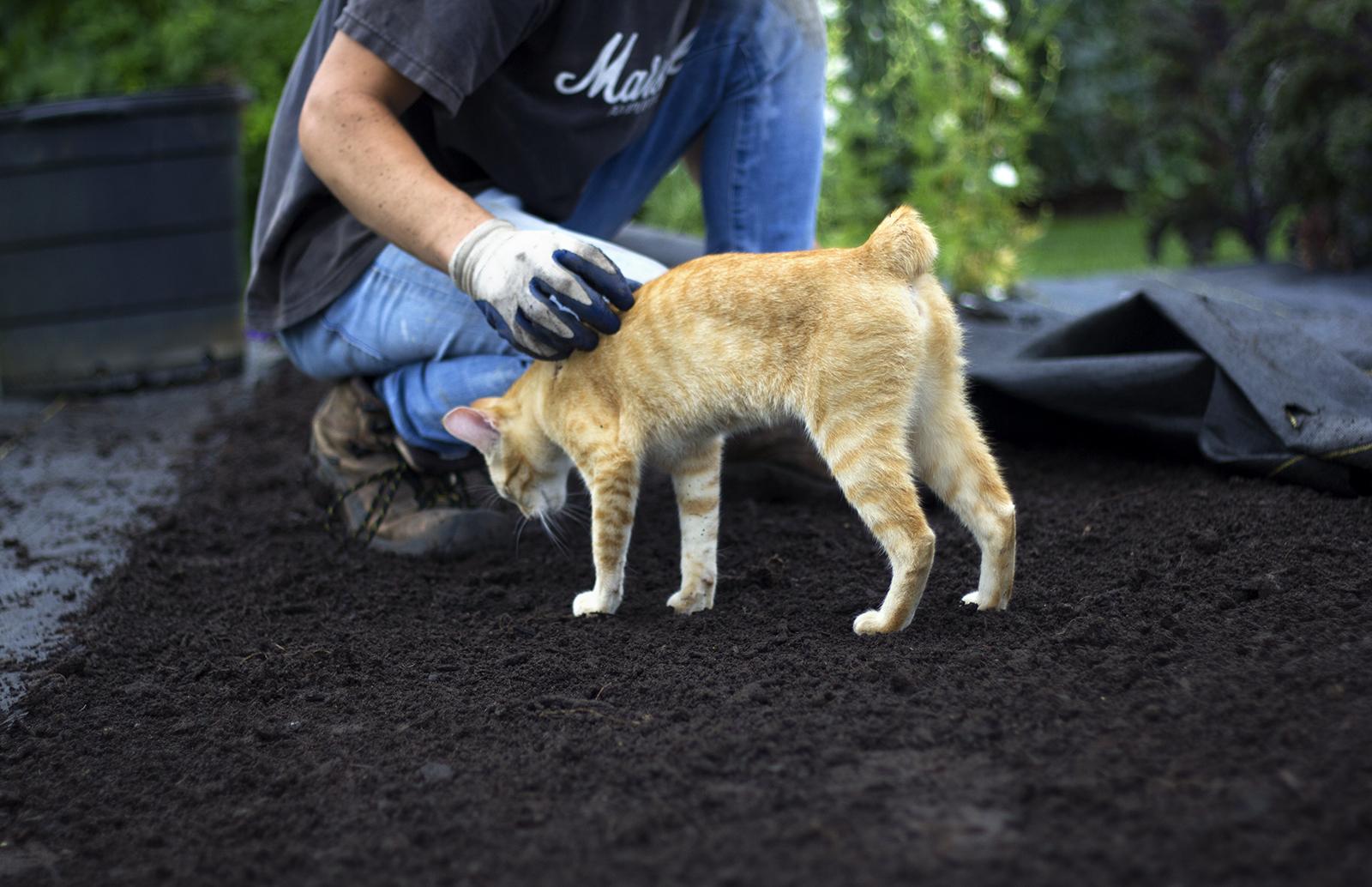 reduced_ss_sulley_compost_garden_dirt_jack_cutting_garden.jpg