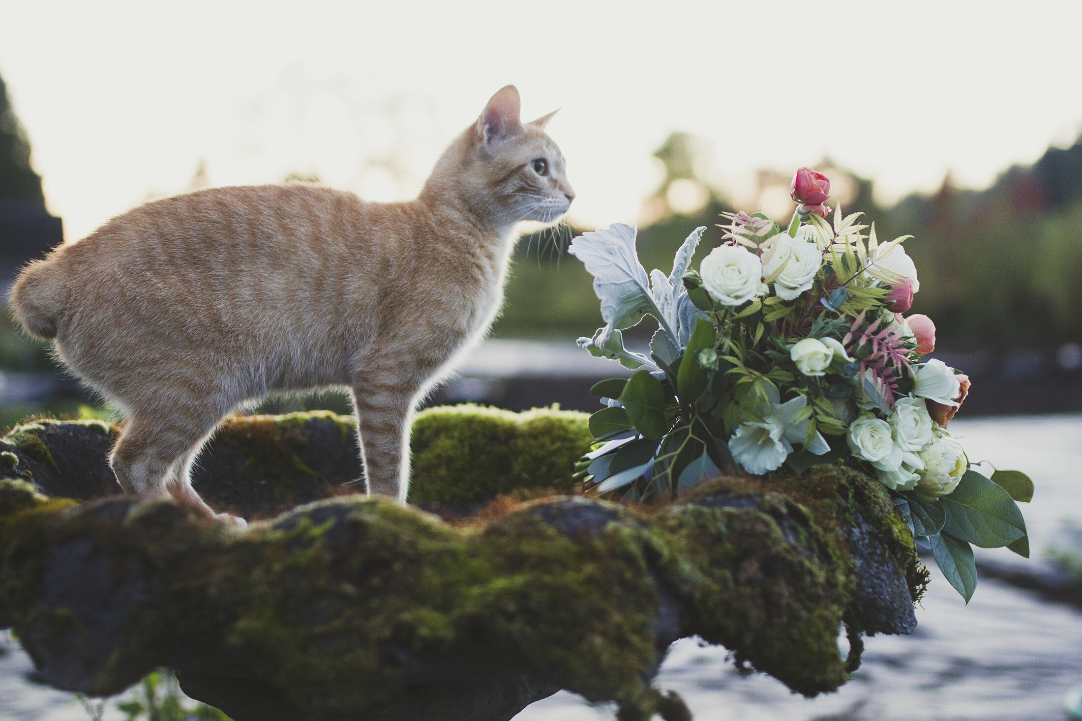 Sulley our cat with a bridal bouquet in the garden