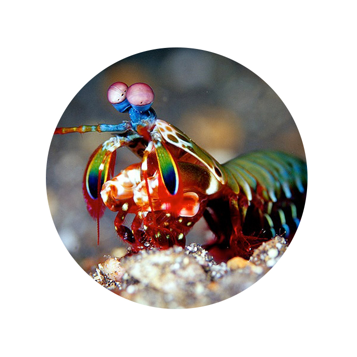 Karl, 2 - You don't know how hard it is to find health care professionals for mantis shrimp. It's all