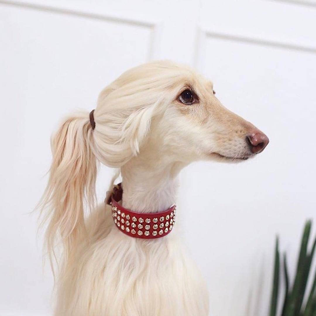 Poopsie, one of our most glamorous and fabulous clients to date, striking a pose after a beautiful puppy balayage and blowout.