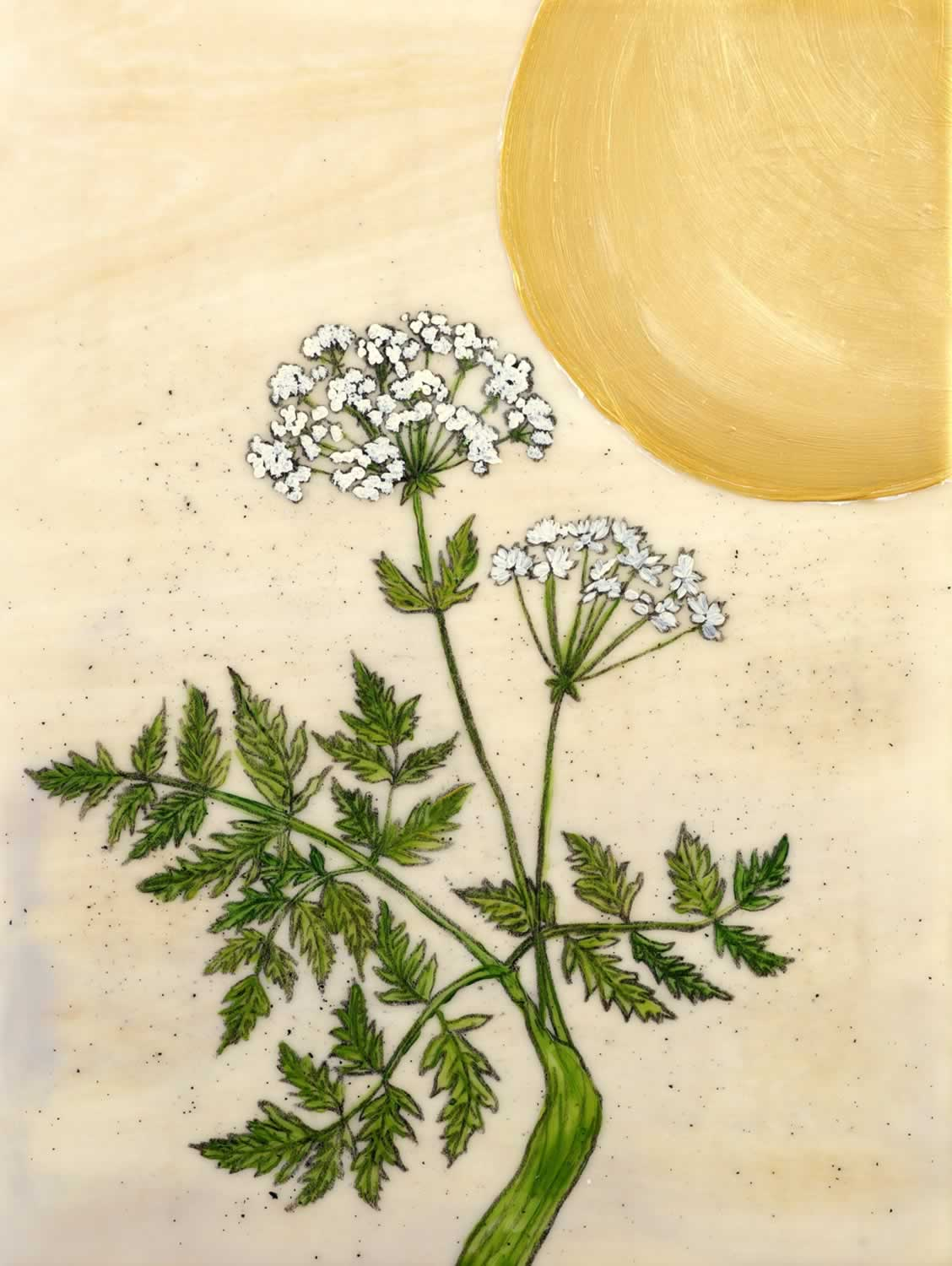 Poison Hemlock (SOLD)