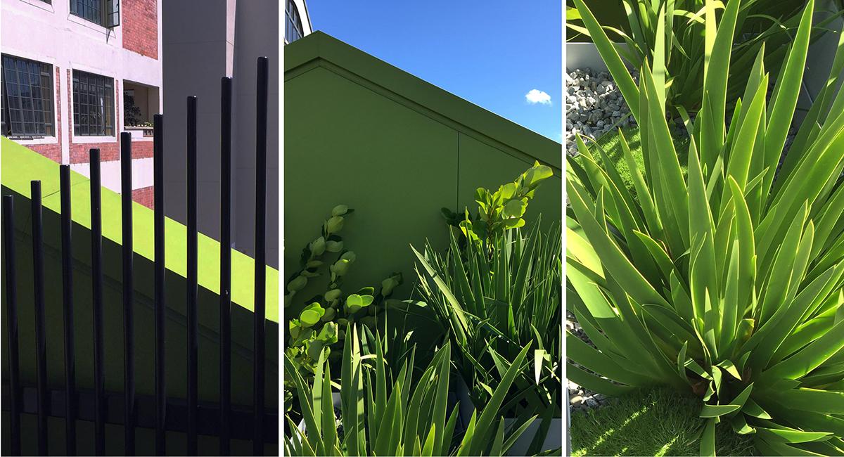 local_Landscape_Architecture_Residental_Planting.jpg