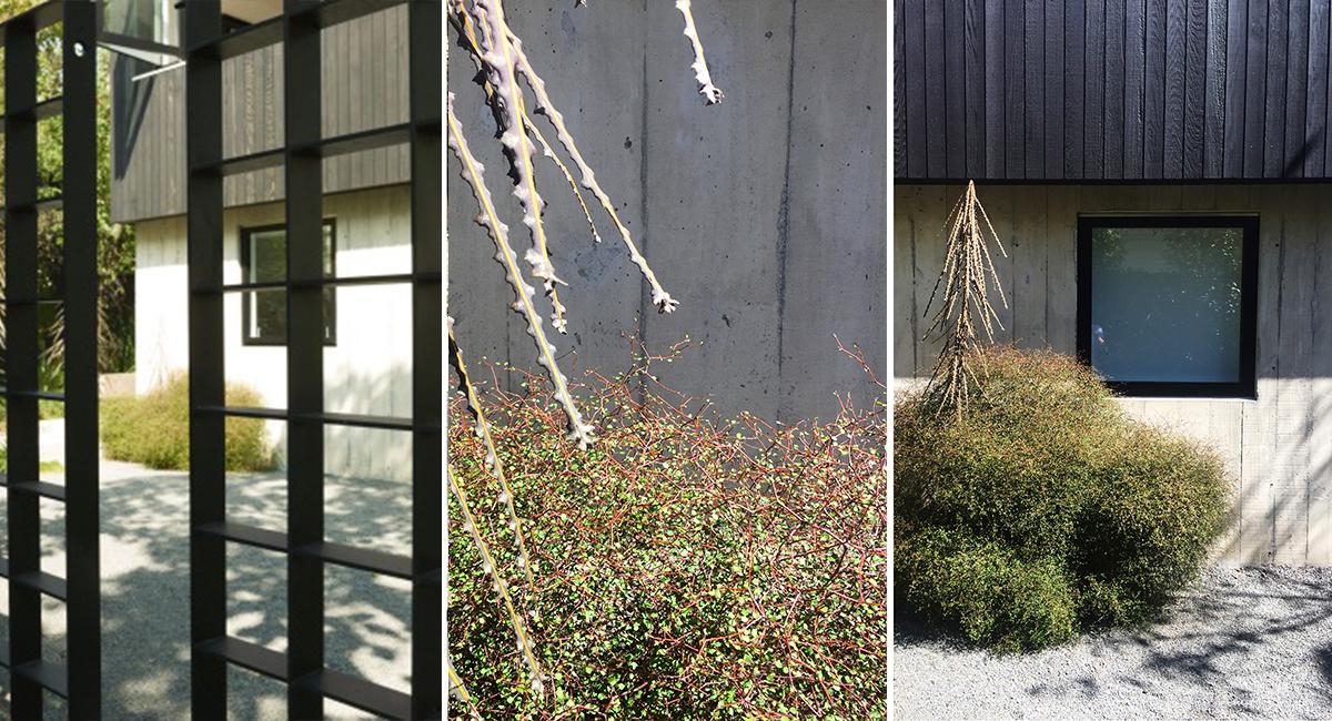local_Landscape_Architecture_Planting_Details.jpg