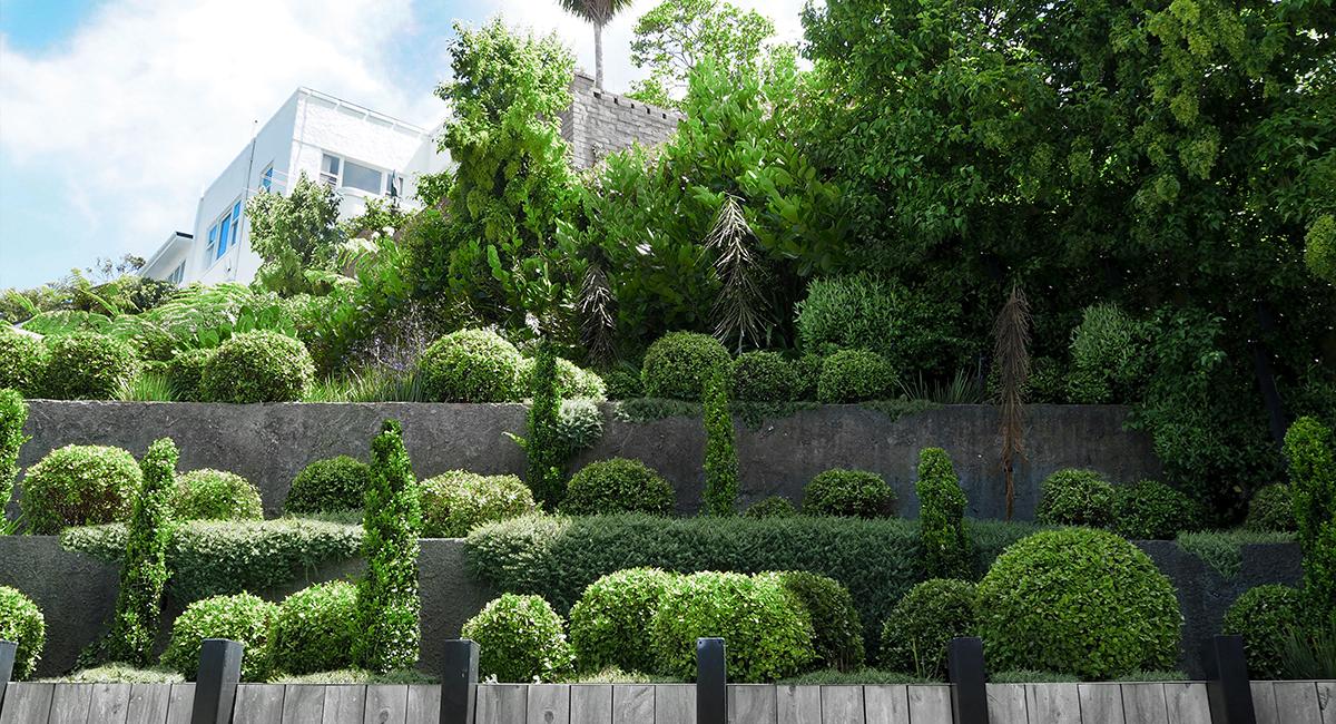 local_Landscape_Architecture_Kelburn_Garden_Retaining_Planting.jpg