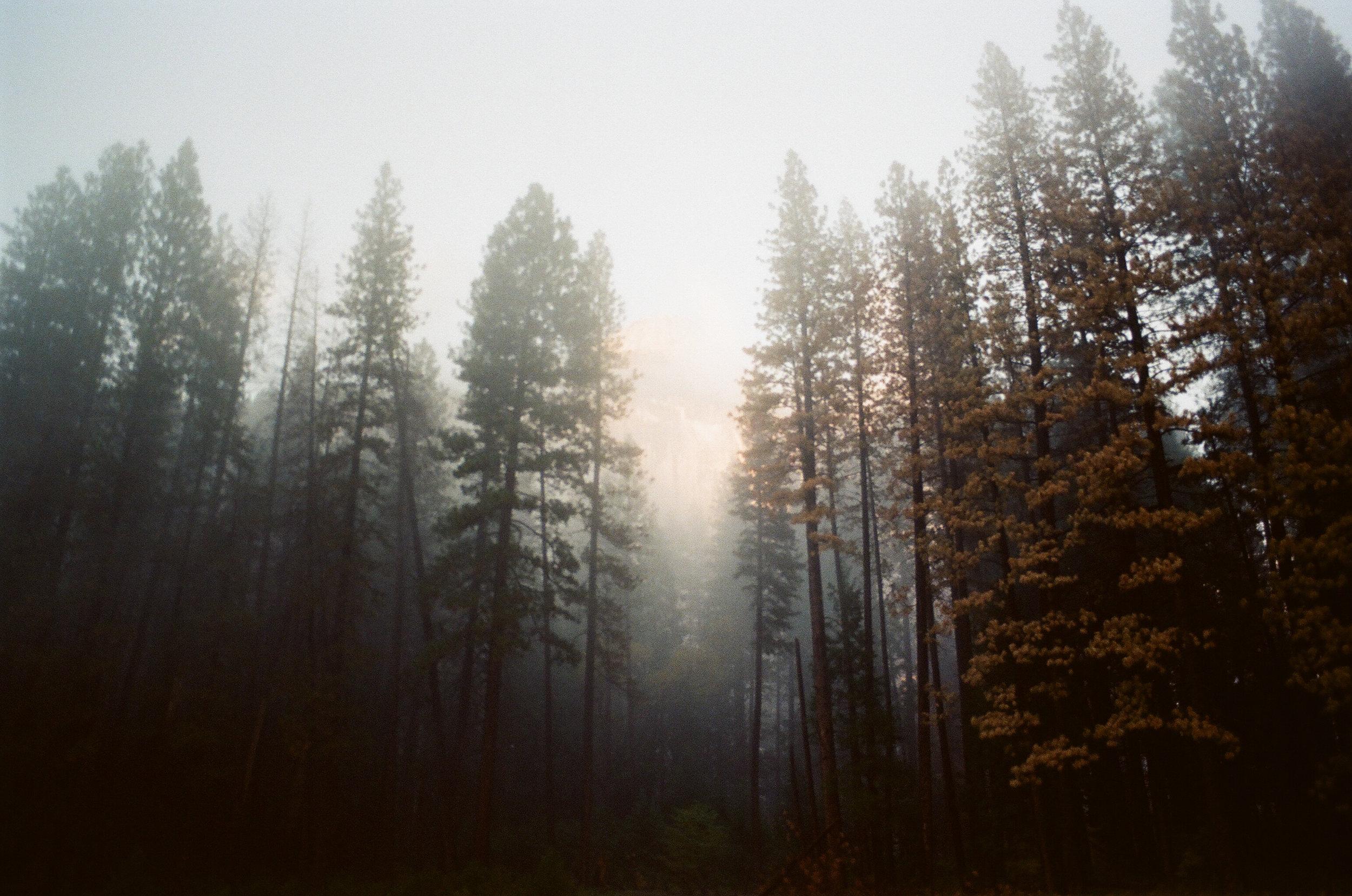 Yosemite -43.jpg
