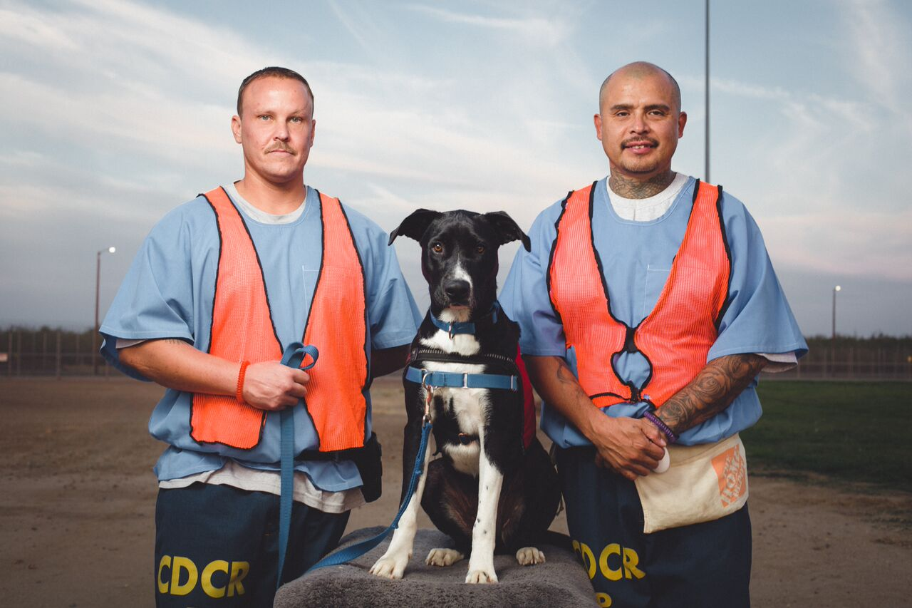 Dogs4Vets-2_preview.jpeg