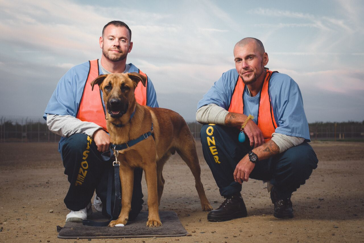Dogs4Vets-3_preview.jpeg