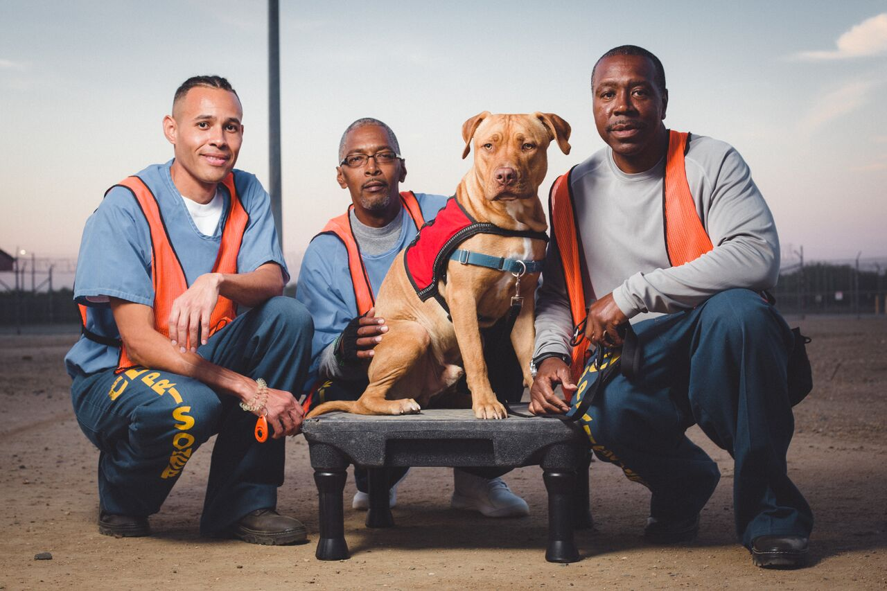 Dogs4Vets-4_preview.jpeg