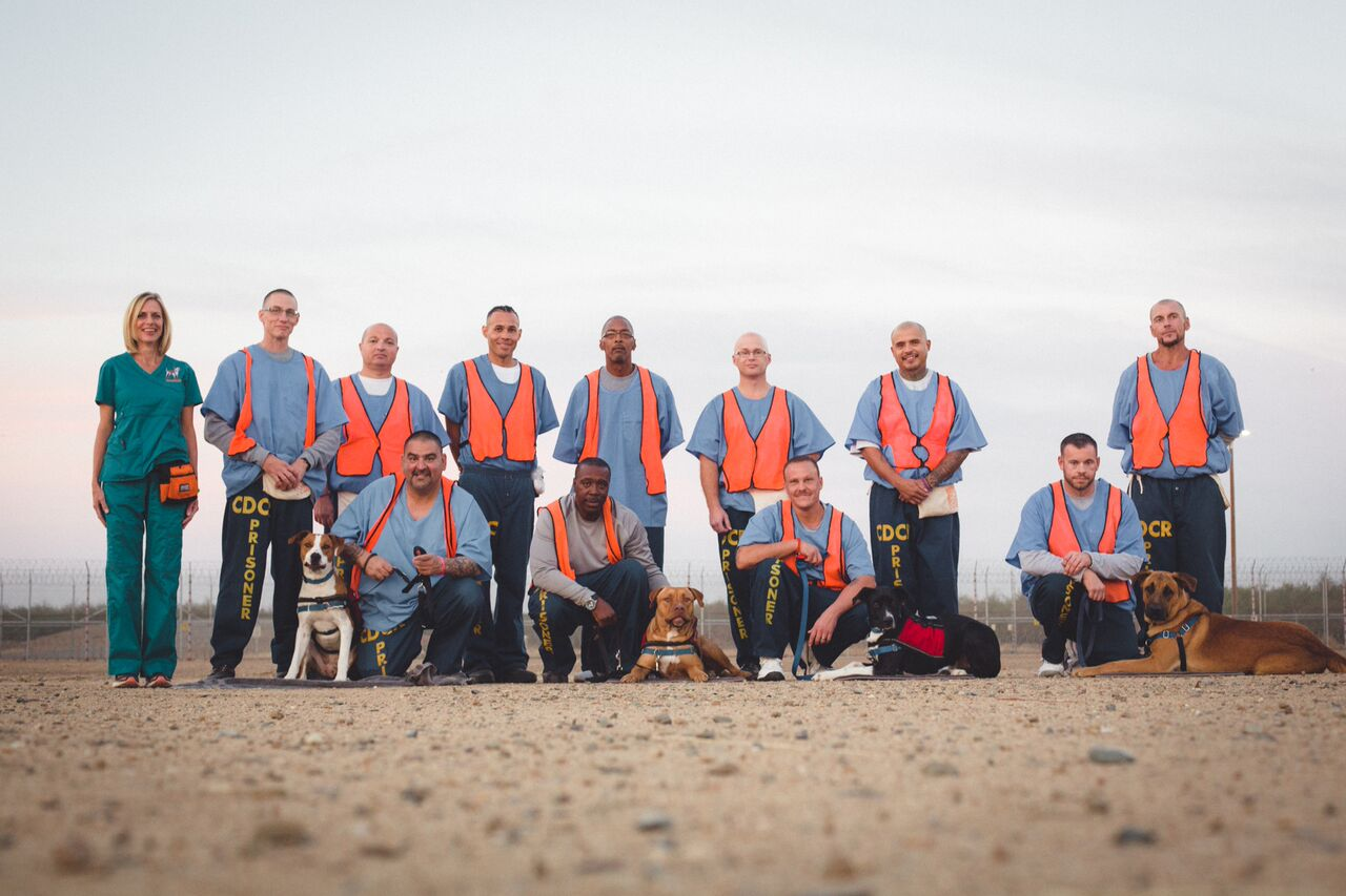 Dogs4Vets-5_preview.jpeg