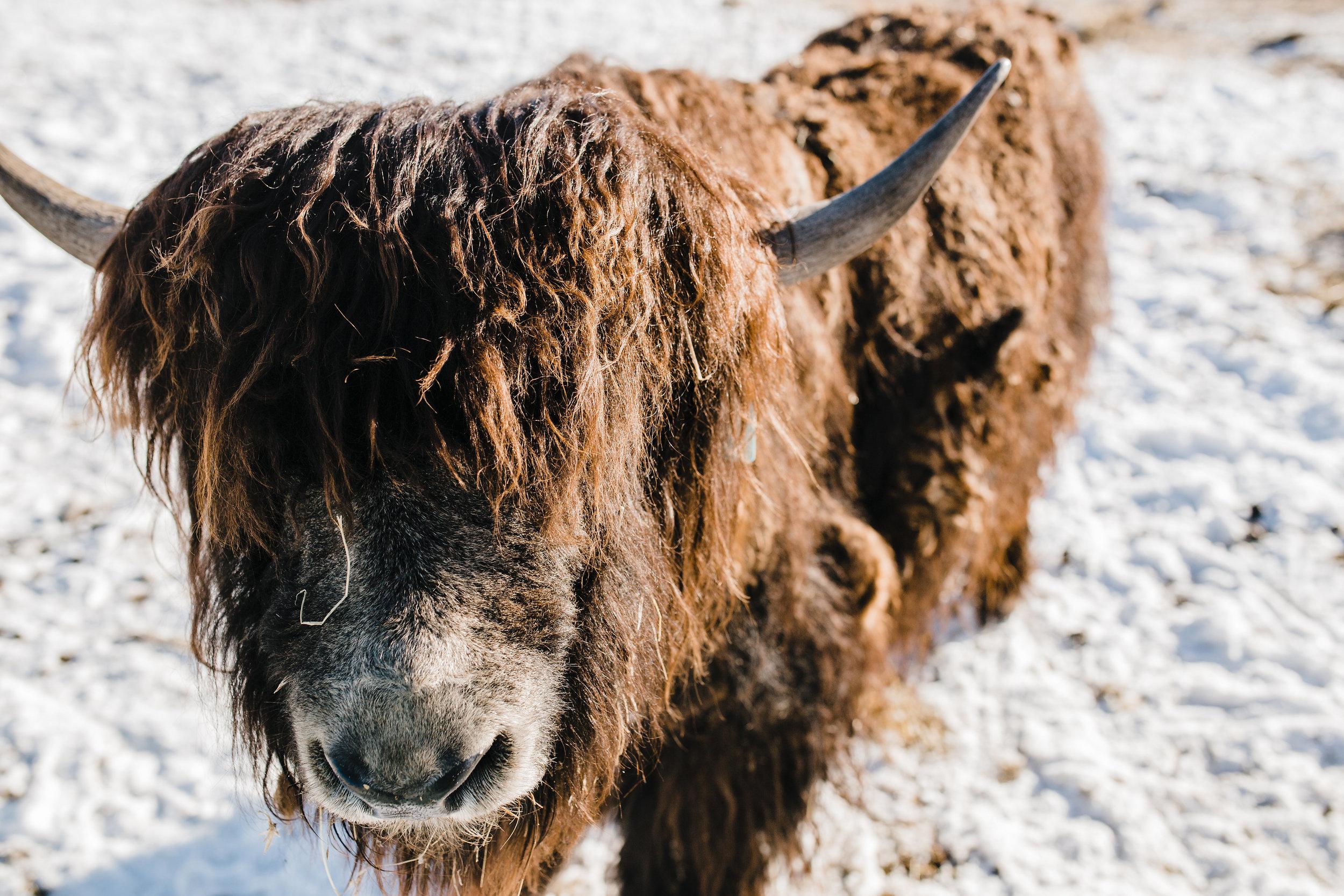 logan utah styled shoot yak