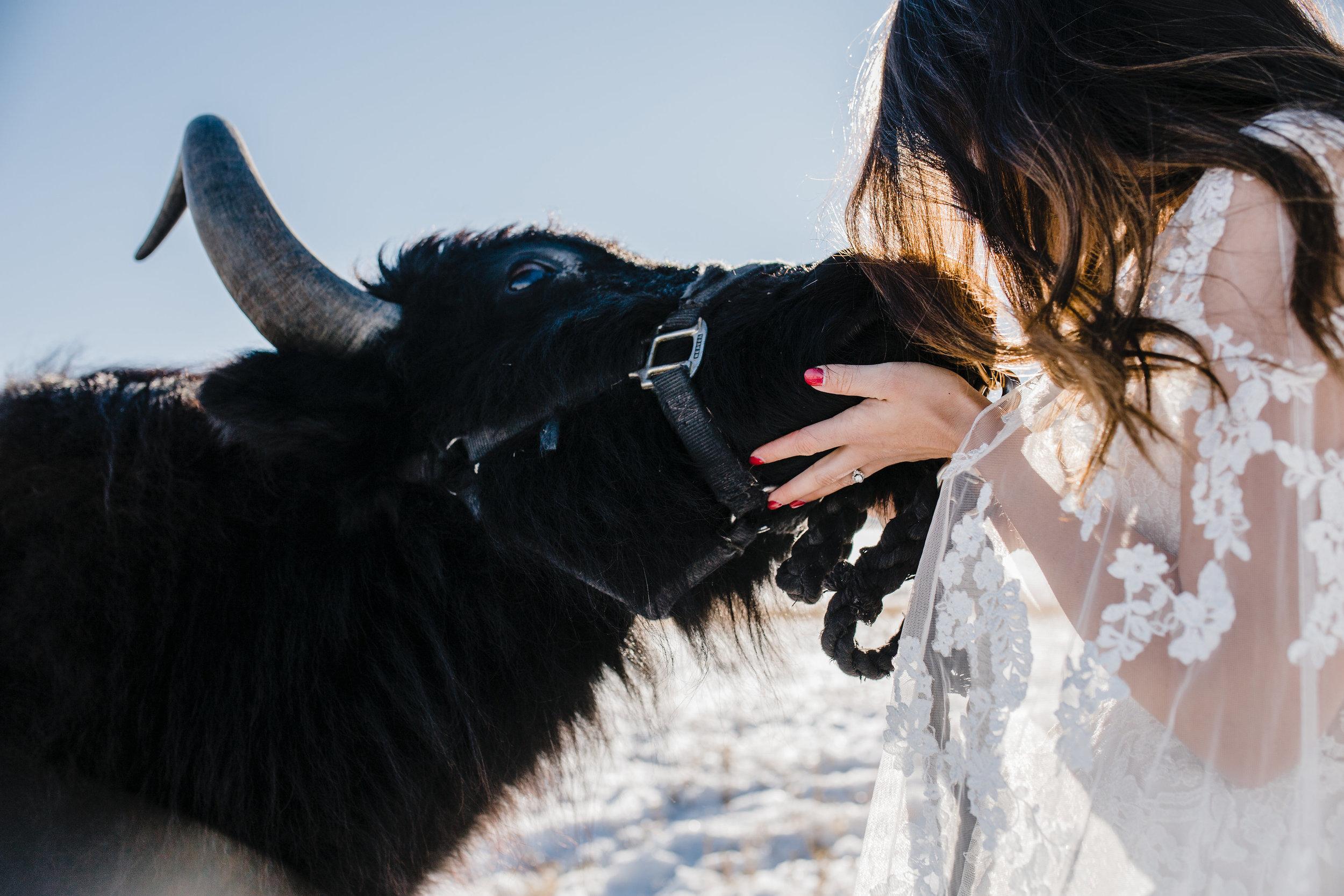 cache valley winter wedding photographer