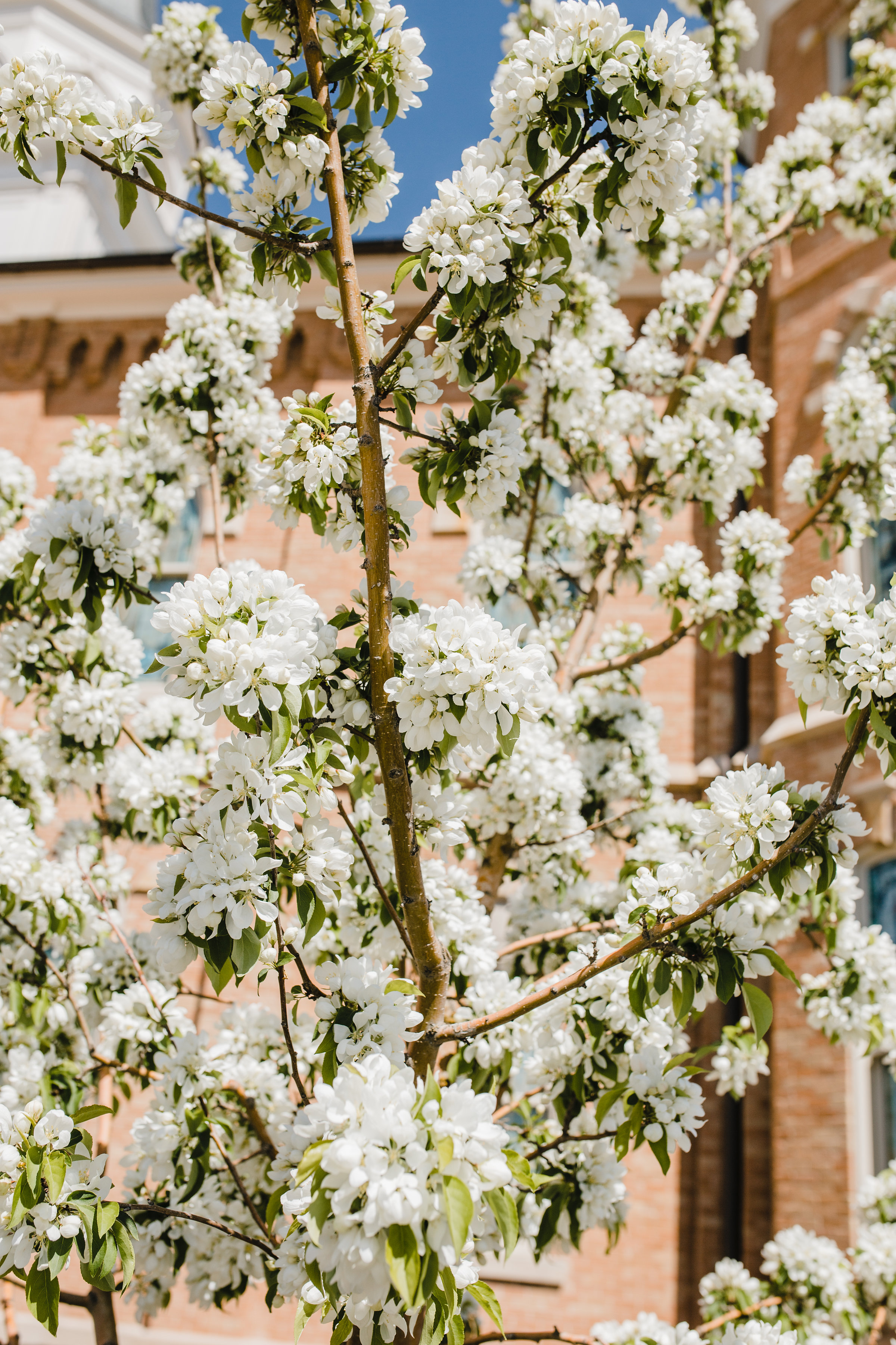 cherry blossoms wedding day photographer arvada colorado wedding day details florals romantic adventurous