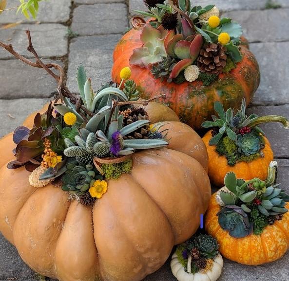 pumpkincrop.jpg