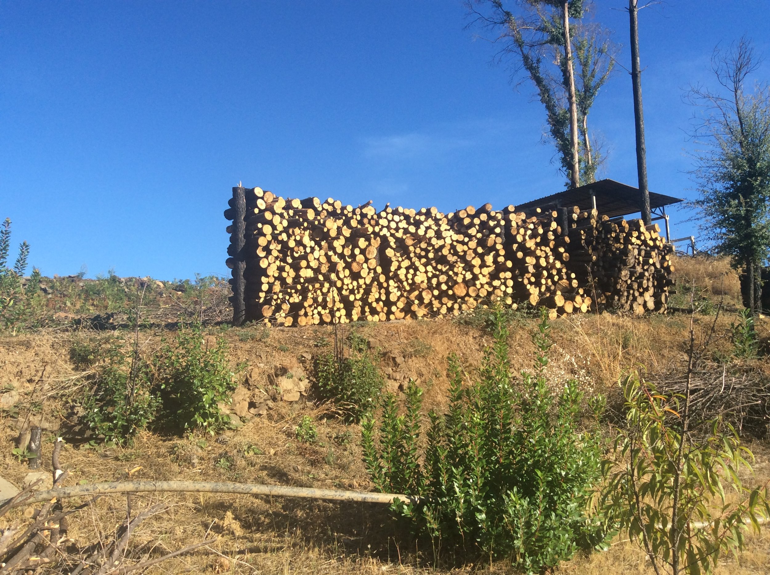 Chopping fire protection channels means we have no shortage of wood…for now.
