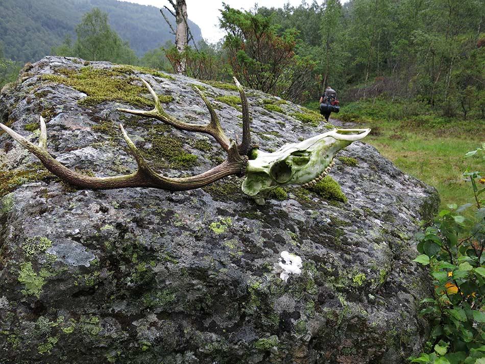 SKJERDALEN:  Mektig natur, brølande hjort og teikn på harde kampar pregar Skjerdalen.