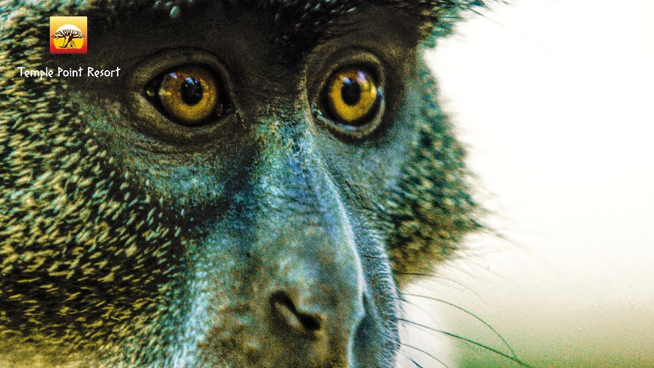 monkey404.jpg