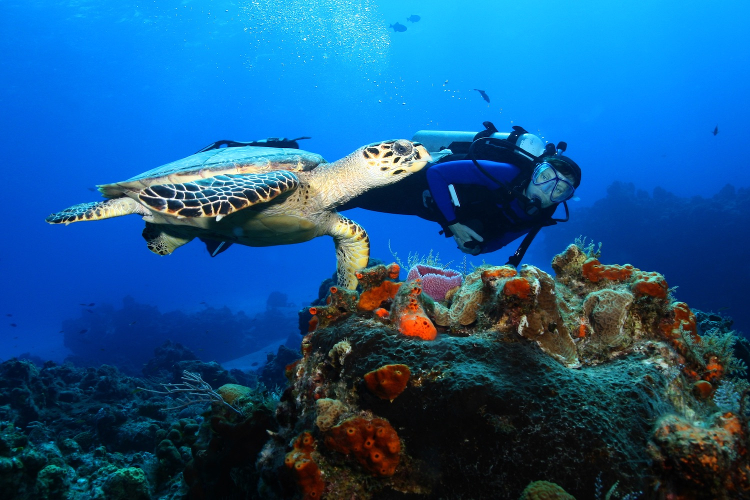Dive into the Indian Ocean and discover all activities we offer.