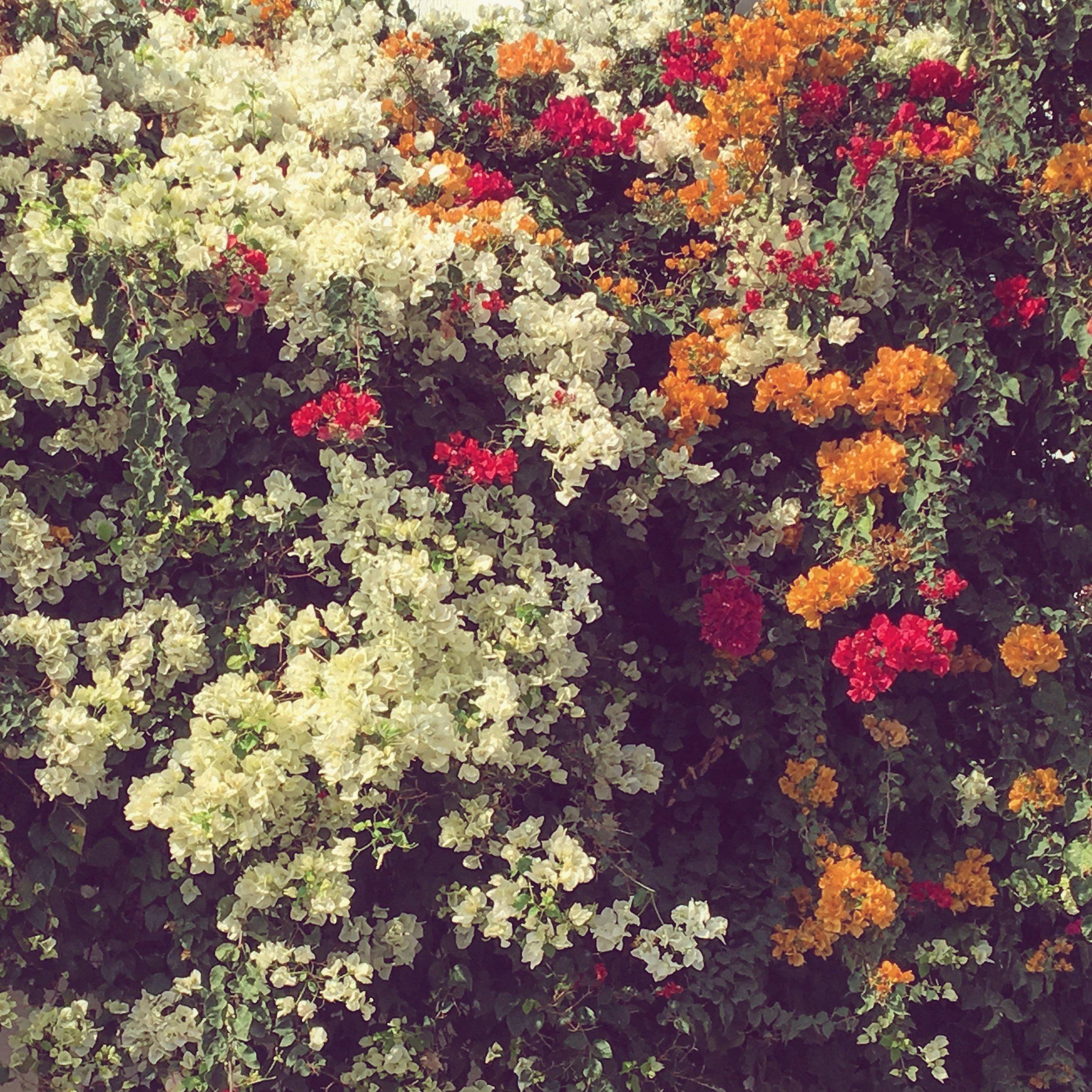 flowers moroccan fall the linguistic yogi
