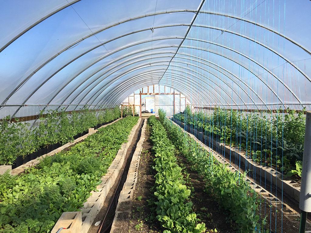 greenhouse resized.jpg