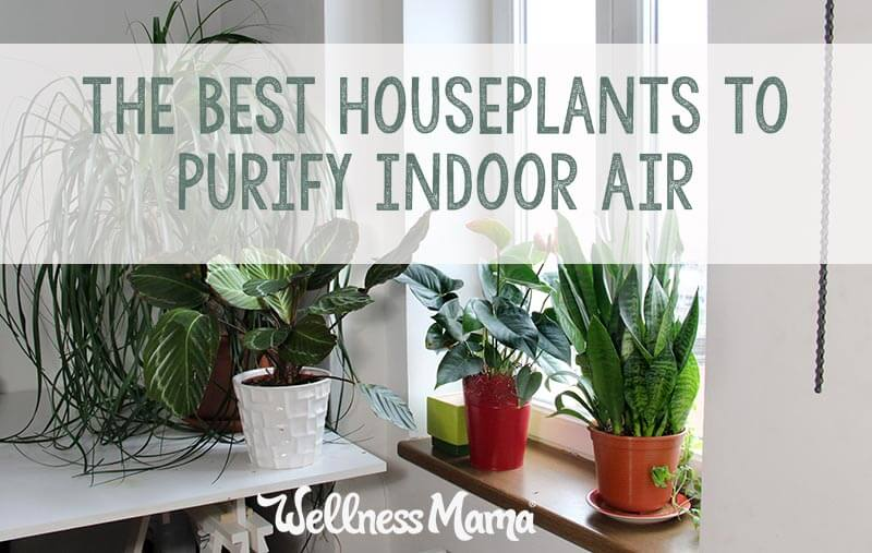 The-best-houseplants-to-purify-indoor-air.jpg