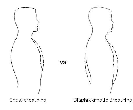 Source: https://yurielkaim.com/belly-breathing/