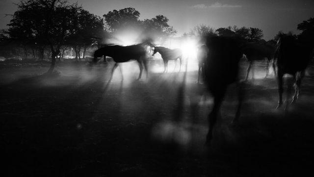 Photographer:Anneke Paterson