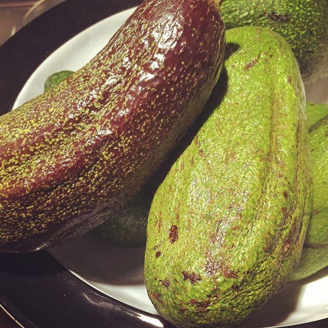 Gorgeous avocados. Non mono culture deliciousness  #nicaragua #casakailani #avocado