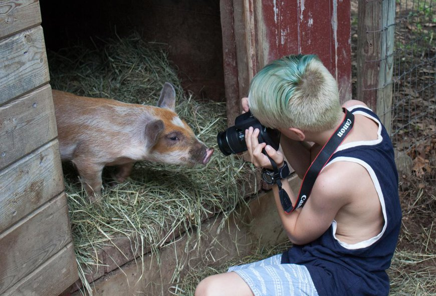 farmpigpic.jpg
