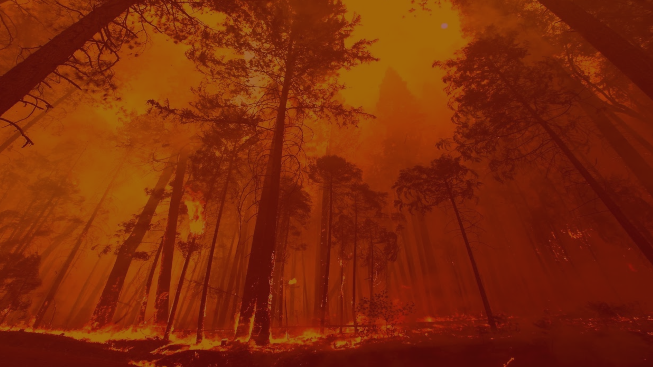 Future of Forestfighting - What if we could better predict and fight forest fires?