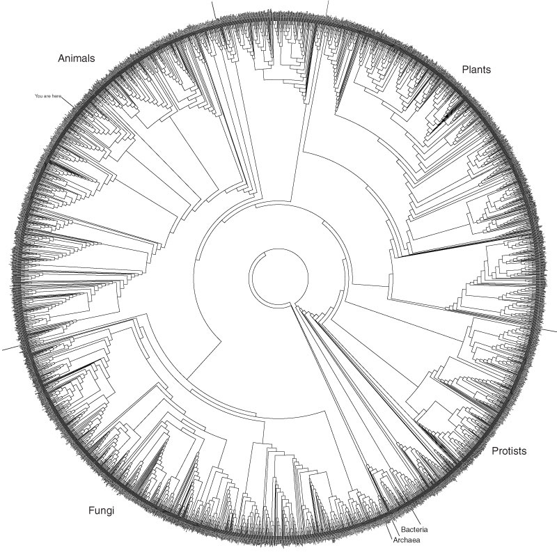The Tree of Life -