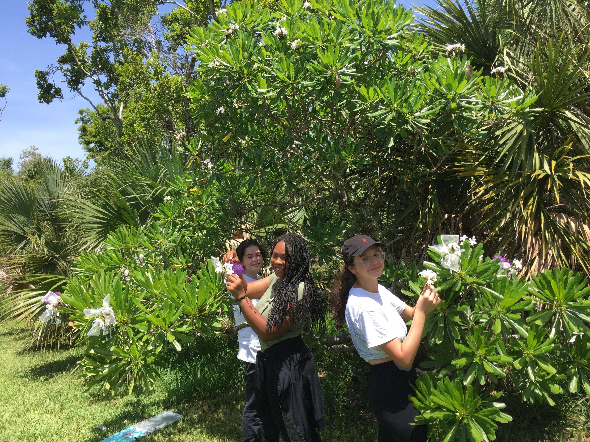 Pollination interns