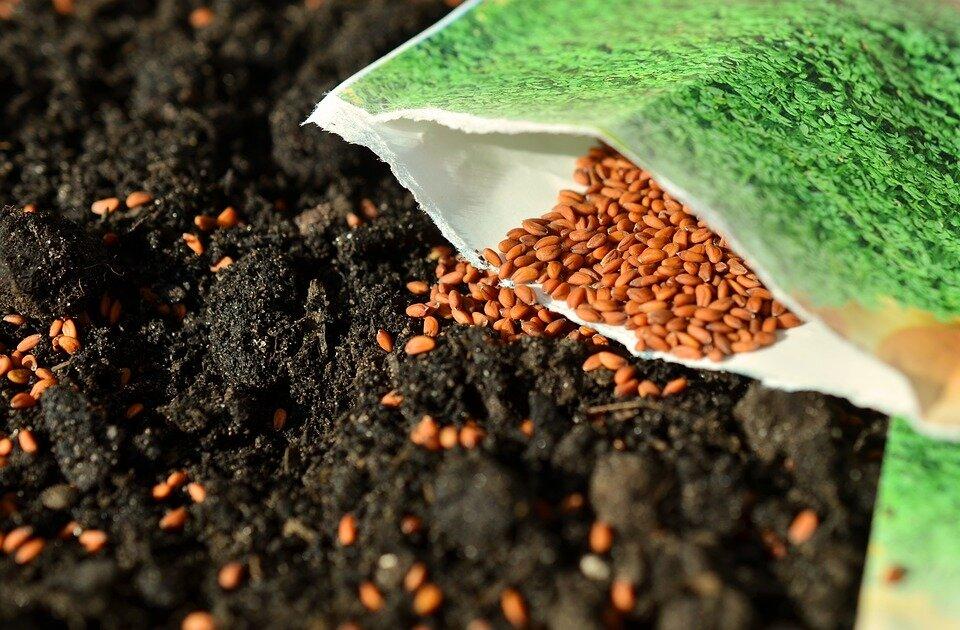 seeds-1302793_960_720.jpg