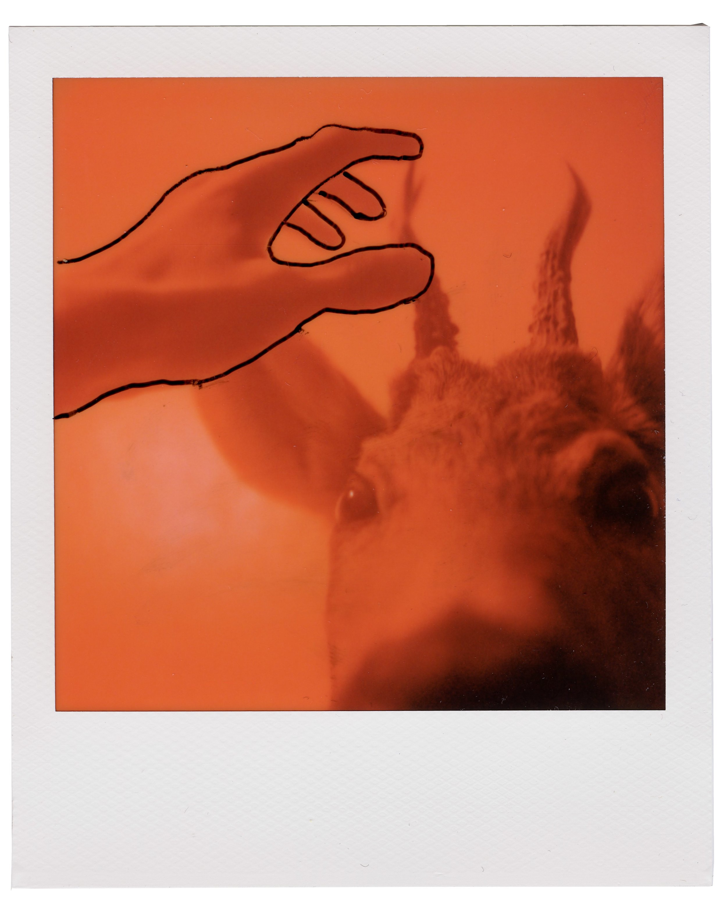 Deer, August 6 2018 (Polaroid SX-70) Thobias Malmberg