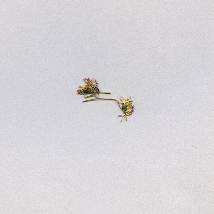 Travel Ephemera Still Life 745, Dry Flower