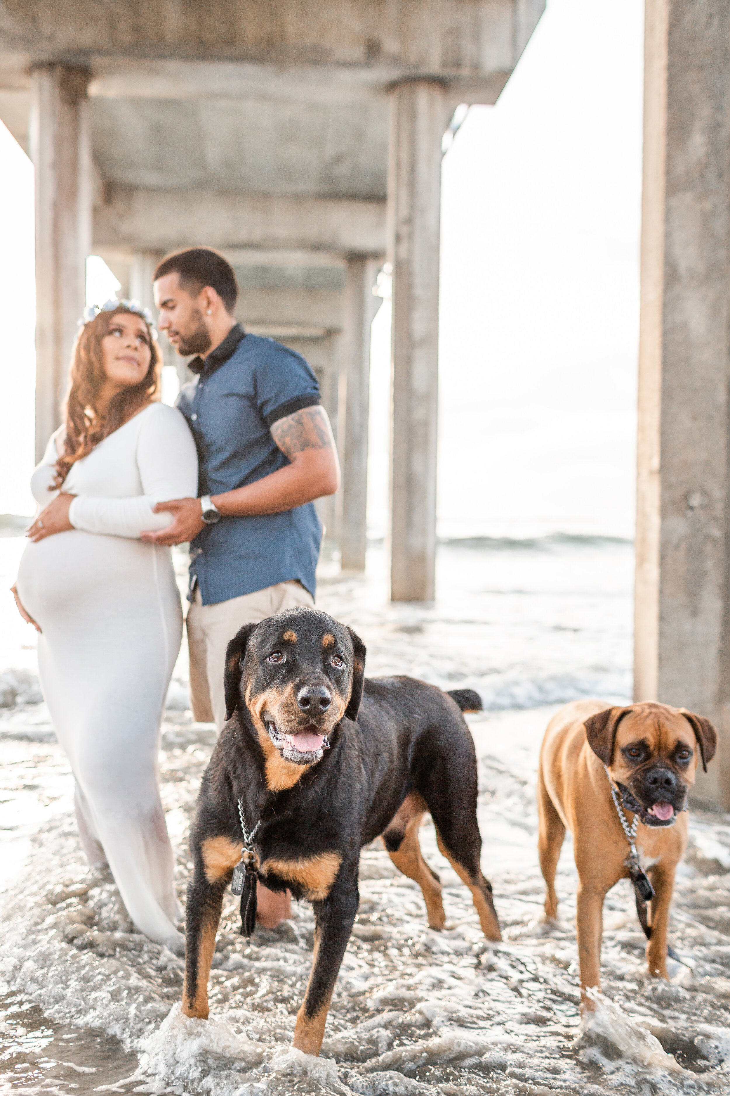 Dogs in Maternity Beach Session in San Diego