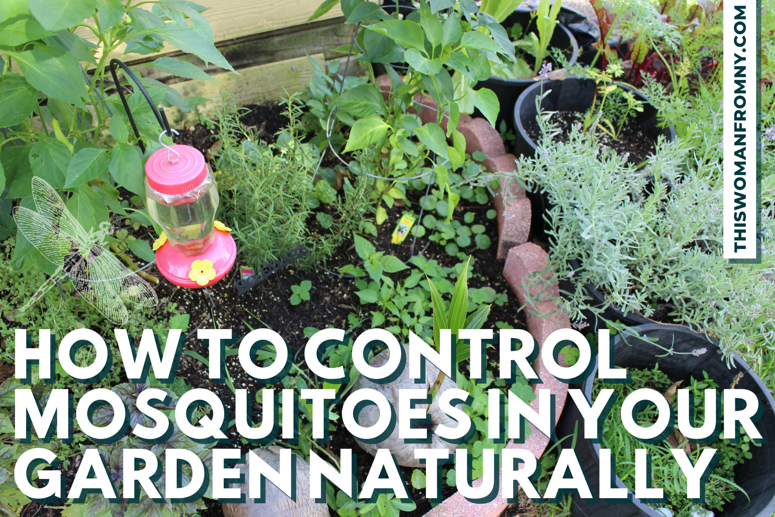 Growing herbs like rosemary and catnip can keep the mosquitoes out!