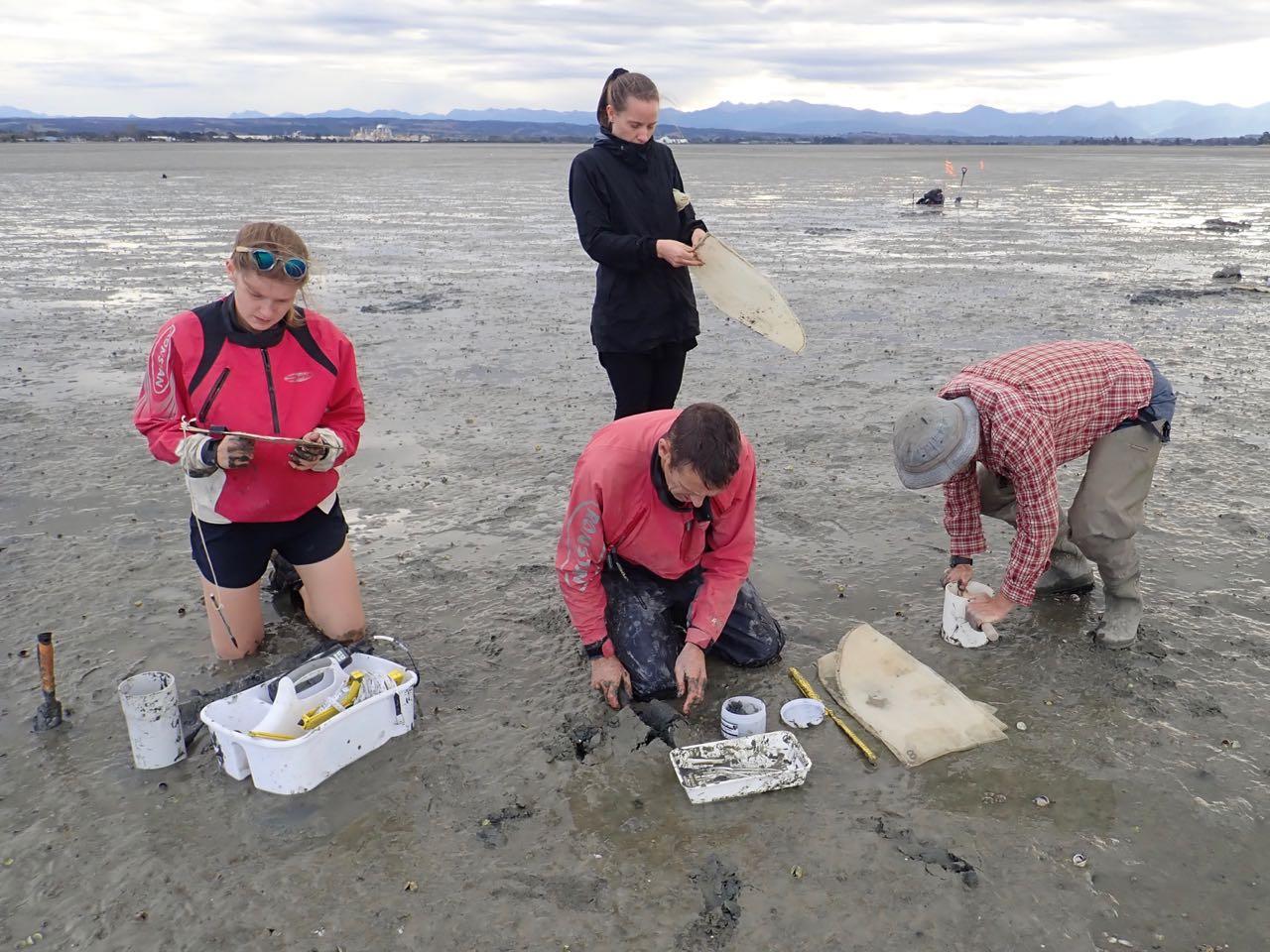 Waimea Inlet state of environment estuary sediment sampling