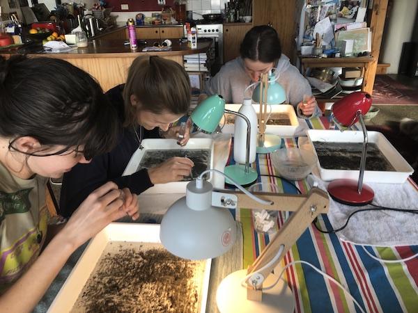 Salt Ecology macroinvertebrate sorting team