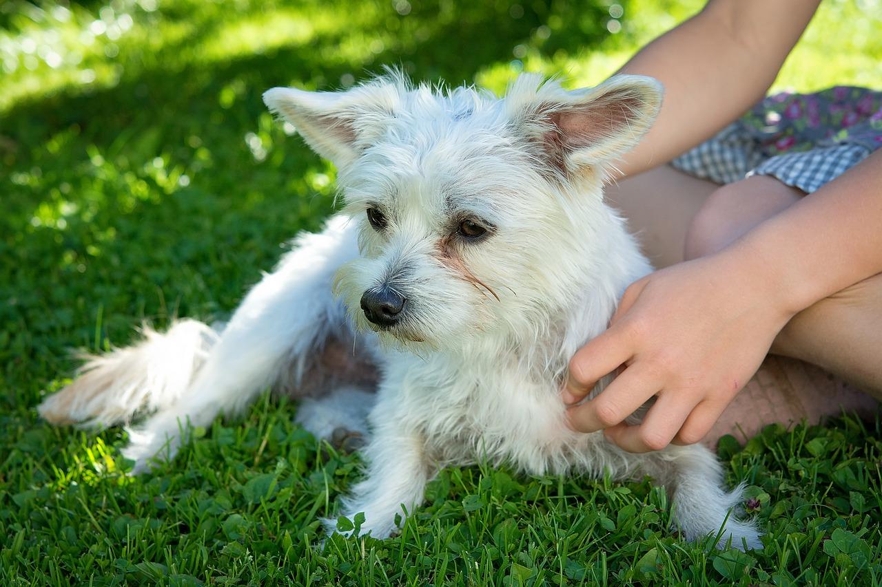 Kurset indeholder: - Hundens anatomiHunden fysiologiHundens bevægelser.Overfladiske muskler, navn og funktionMassagegrebPraktisk massage af hundenUdgangspunkt i din hunds udfordringer og behov