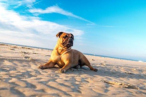Hund på strand.jpg