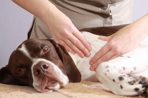 Canine-Massage.jpg