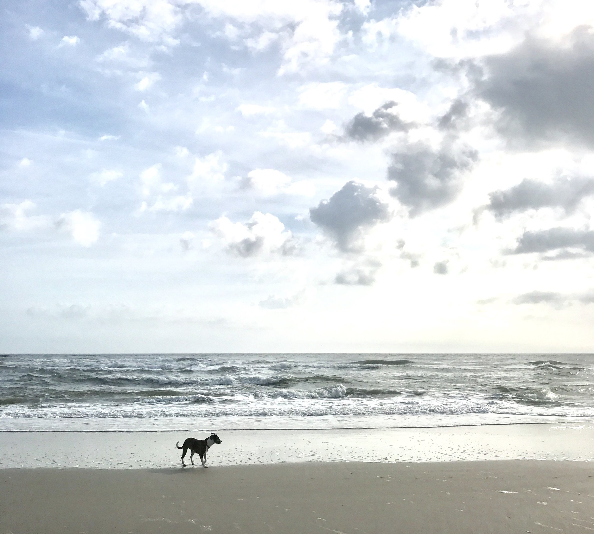 Beach scene.jpg