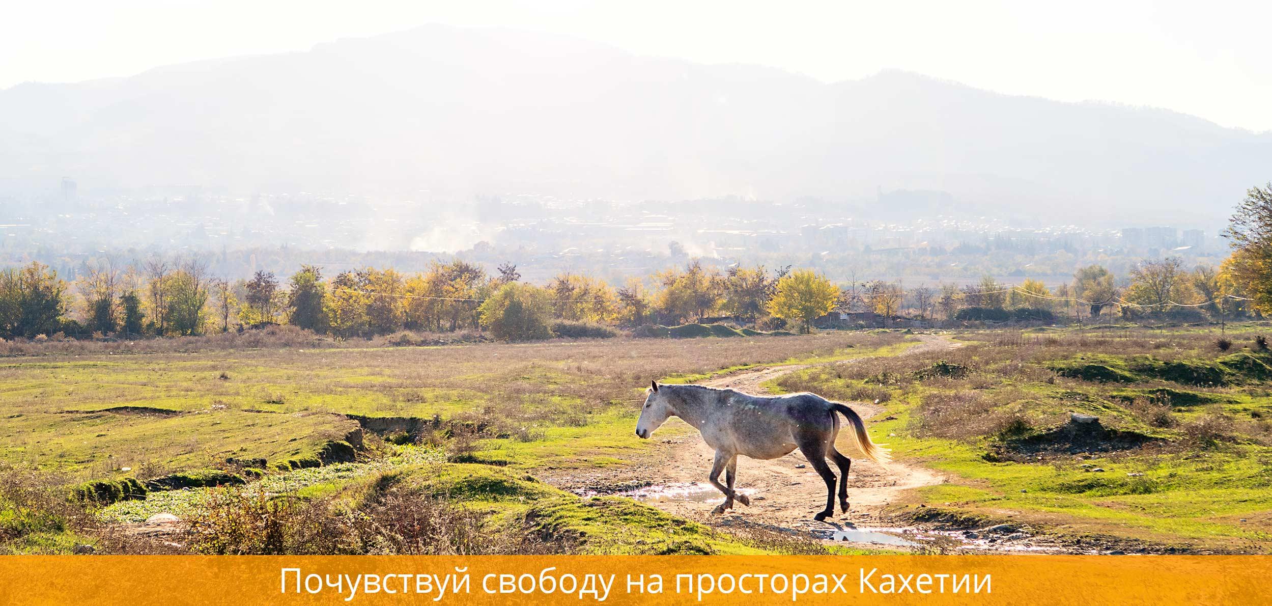 Лошадь Кахетия