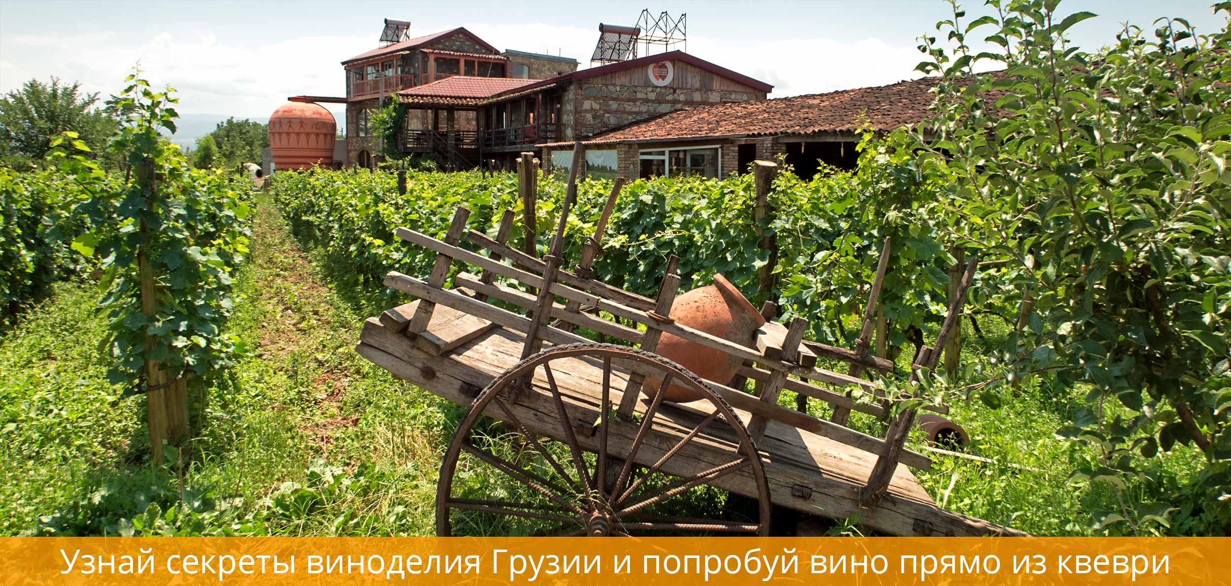 Музей Вина Братьев Близнецов Напареули
