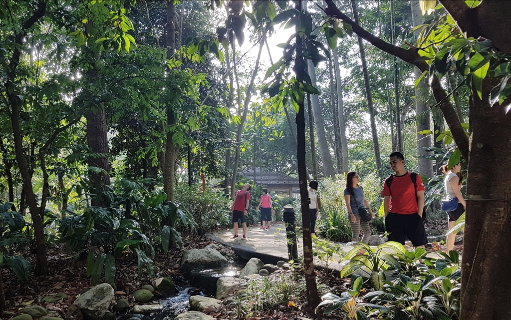 Forest bathing, shinrin yoku, forest therapy, Singapore