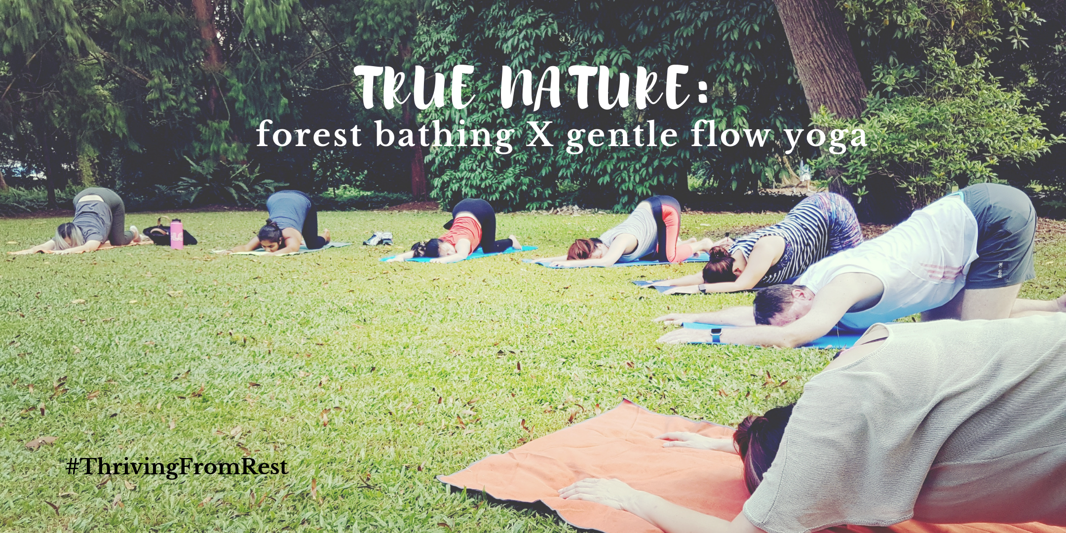 True Nature: forest bathing X gentle flow yoga, Singapore