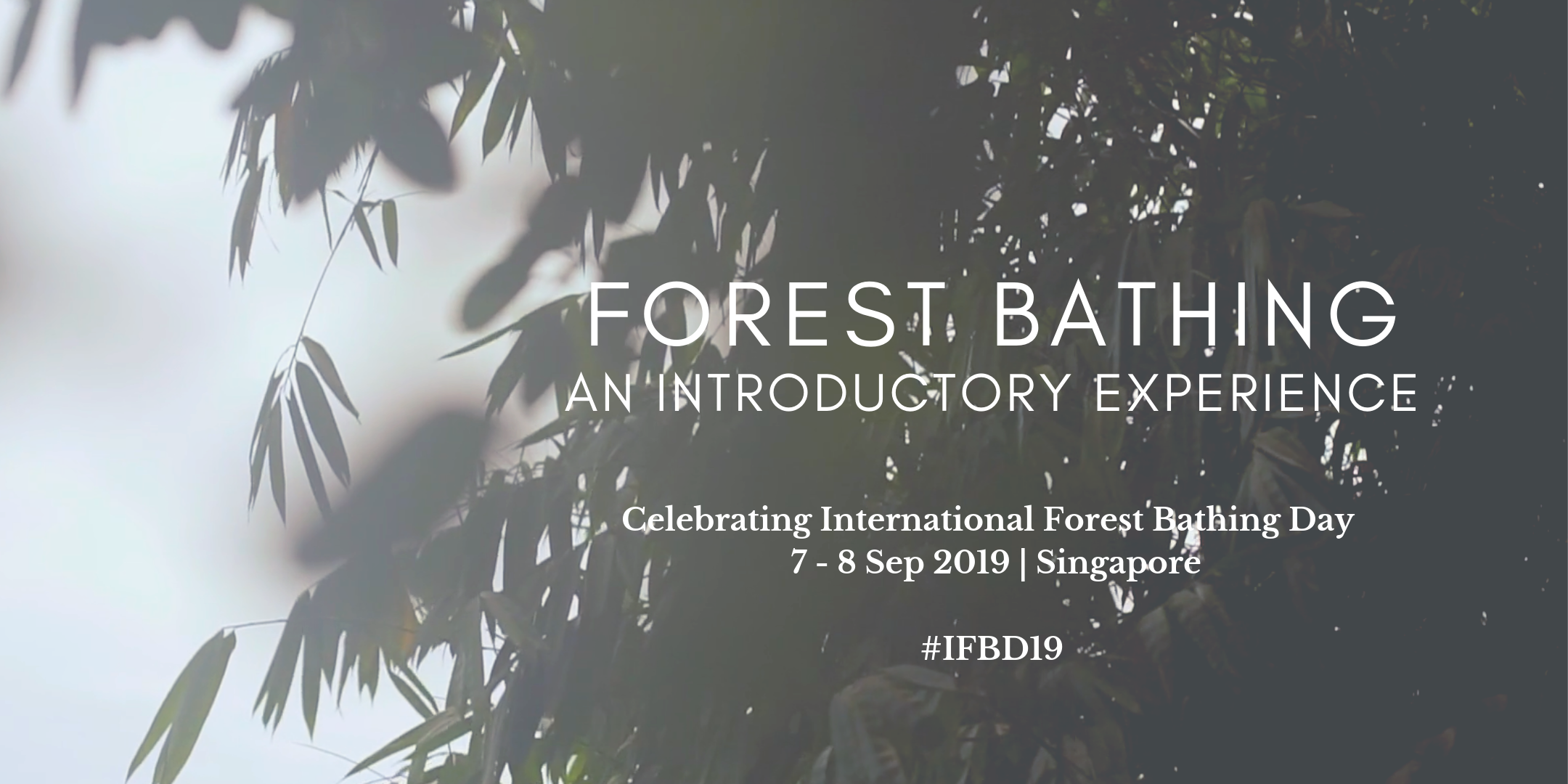 Forest bathing: an introductory experience, Singapore, forest therapy